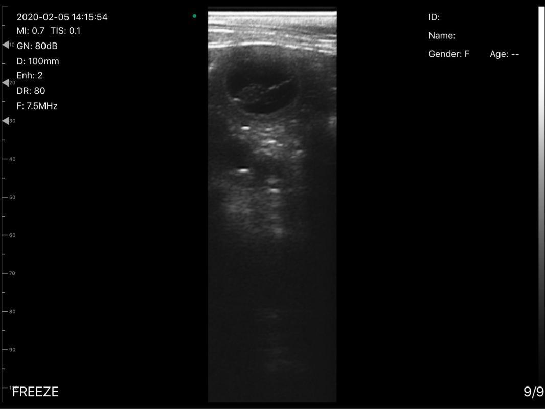 Veterinaire pornic gestation 26 eme jour